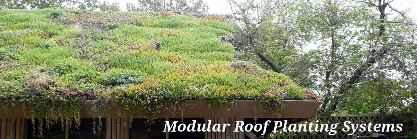 Modular Roof Planting Systems